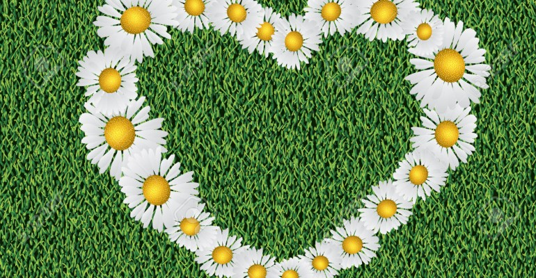 Heart shaped daisy flowers on grass background.